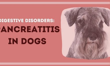 Digestive Disorders: Pancreatitis in Dogs