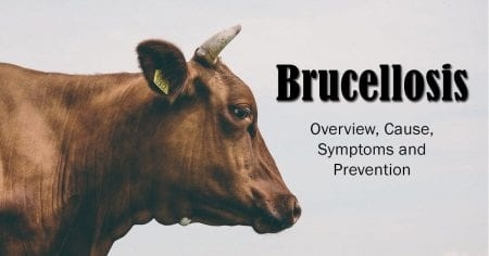 Brucellosis – Overview, Cause, Symptoms and Prevention