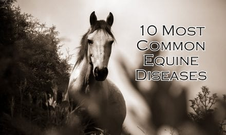10 Most Common Equine Diseases