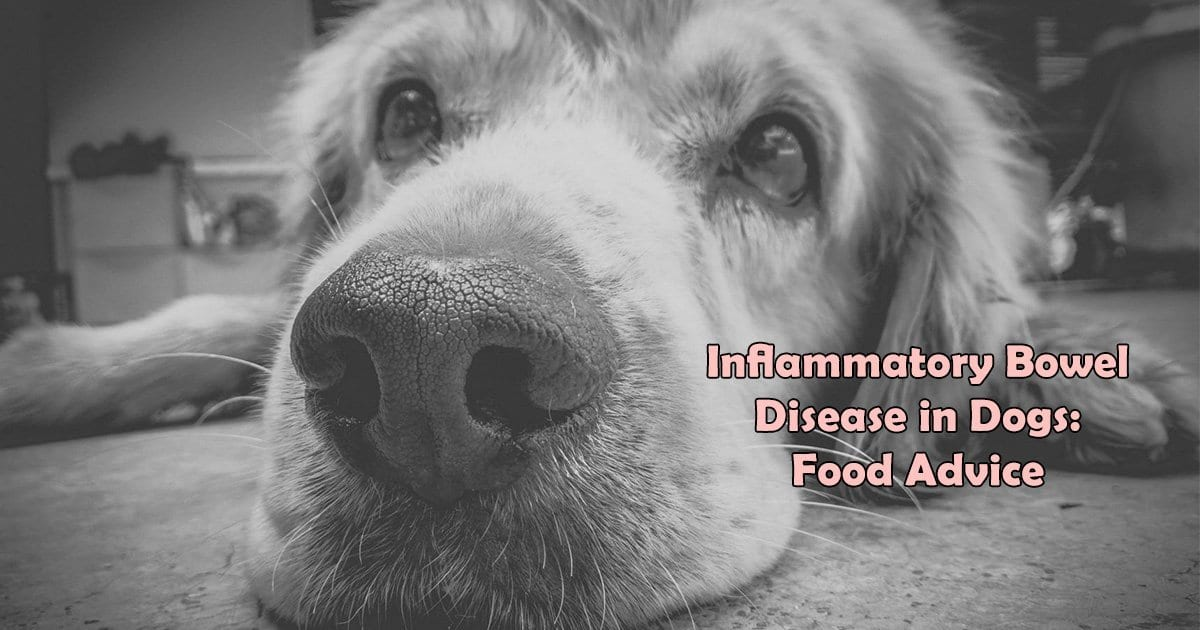 Inflammatory Bowel Disease in Dogs: Food Advice