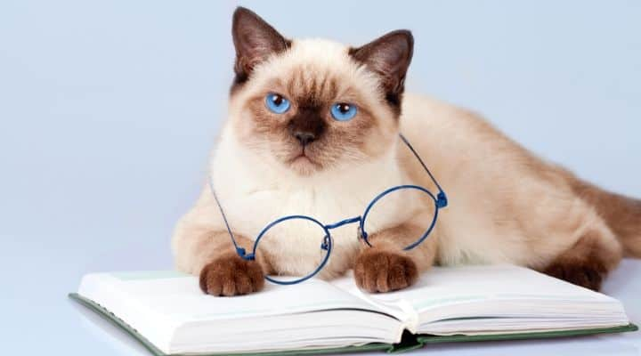 cat with eyeglasses and a book