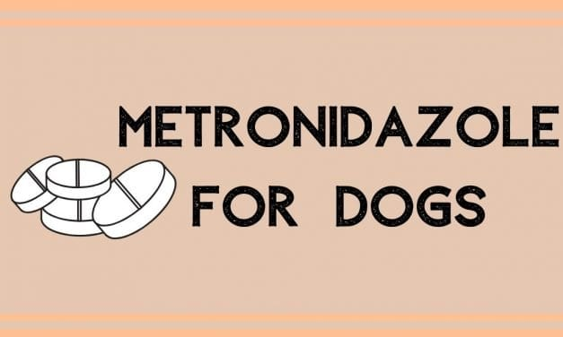 Metronidazole For Dogs: Uses, Dosage, And Side Effects
