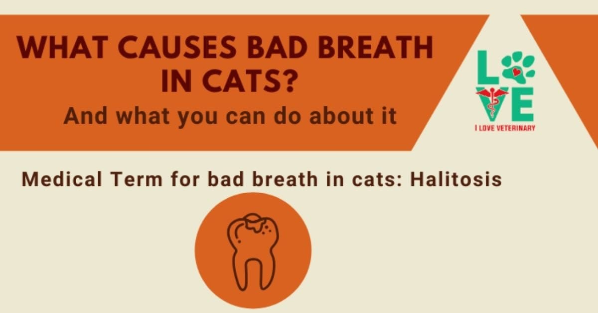 What causes bad breath in cats and what can we do about it?