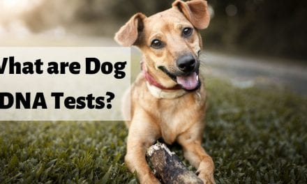 What are Dog DNA Tests?