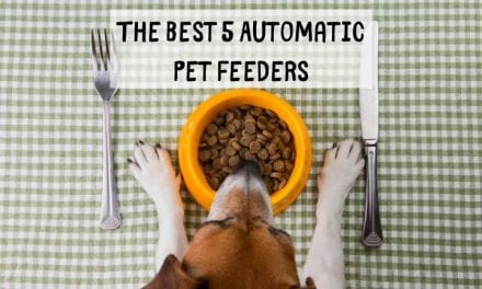 The Best 5 Automatic Pet Feeders
