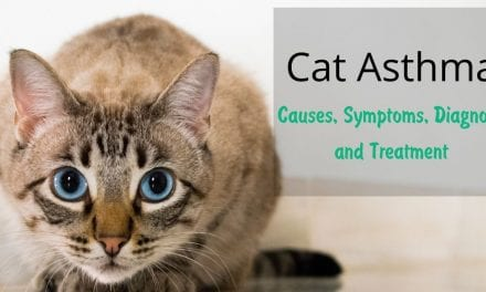Cat Asthma – Causes, Symptoms, Diagnose and Treatment