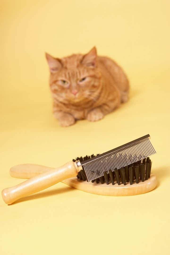 Cat brush I love veterinary