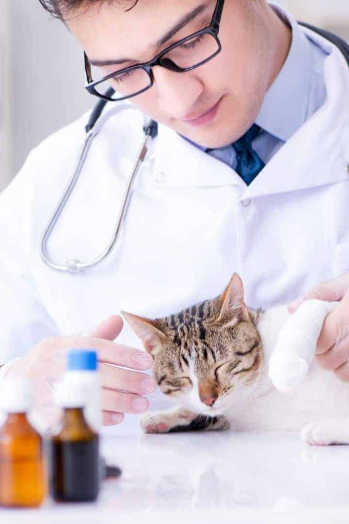 Cat with vet and medications I love veterinary