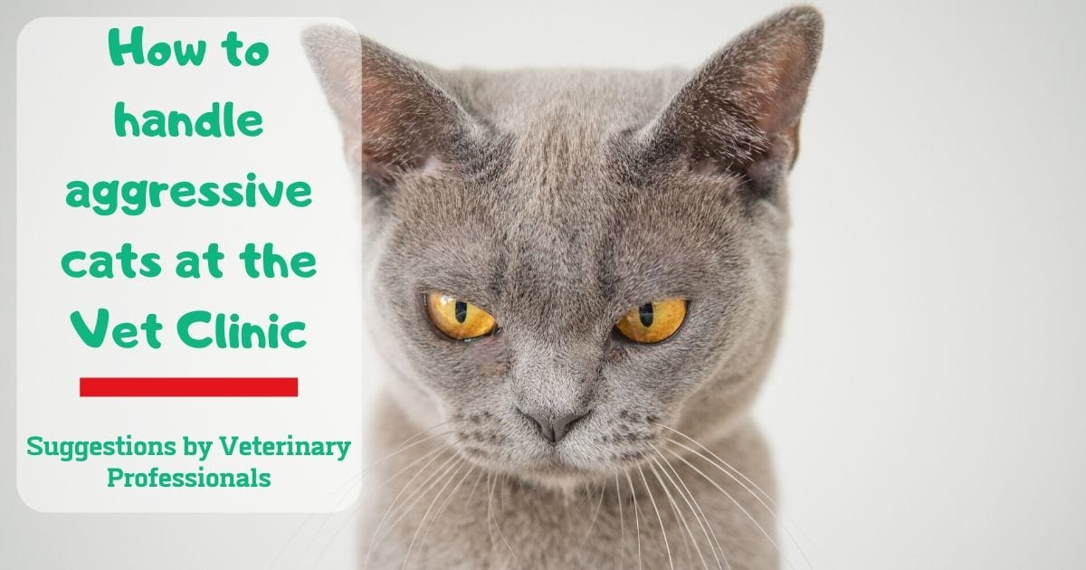 How to handle aggressive cats at the Vet Clinic – Suggestions by Veterinary Professionals