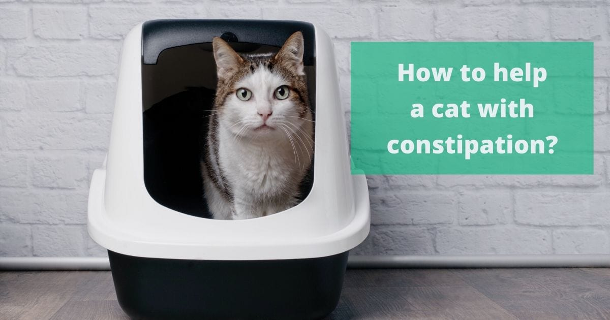 How to help a cat with constipation?