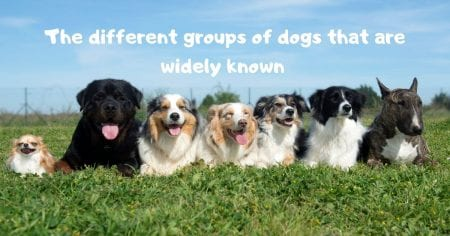 The different groups of dogs that are widely known