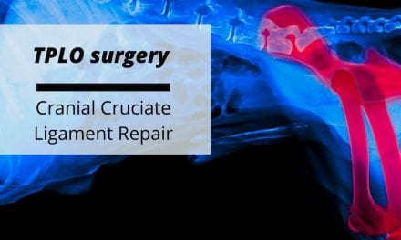 TPLO surgery – Cranial Cruciate Ligament Repair