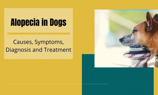 Alopecia in Dogs – Causes, Symptoms, Diagnosis and Treatment