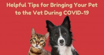 Helpful Tips for Bringing Your Pet to the Vet During COVID-19