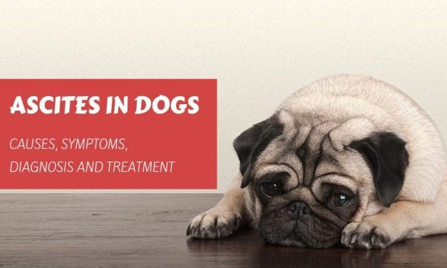 Ascites in Dogs – Causes, Symptoms, Diagnosis and Treatment