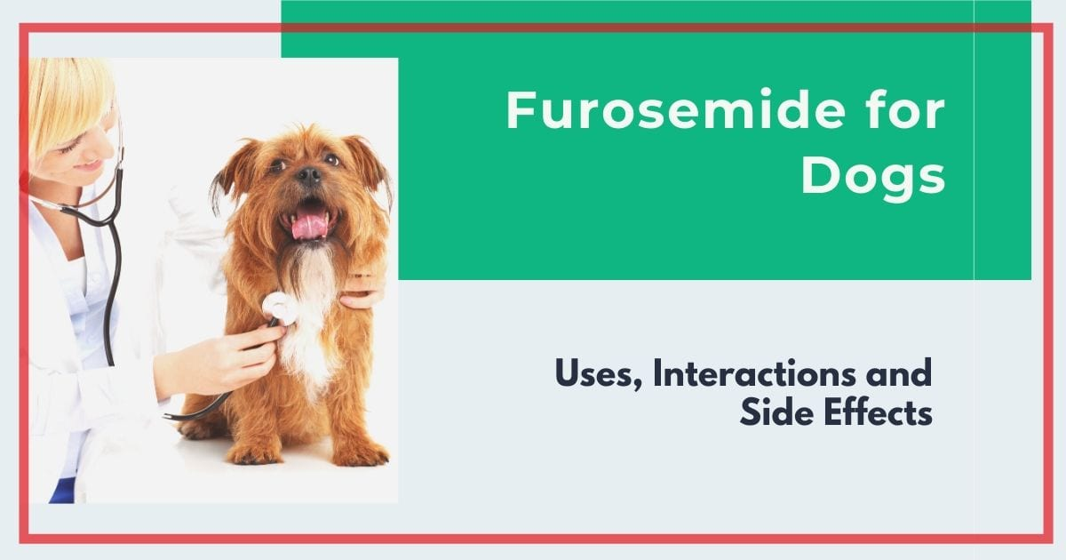 Furosemide for Dogs: Uses, Interactions and Side Effects
