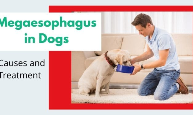 Megaesophagus in Dogs – Causes and Treatment