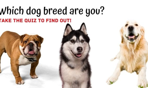Which dog breed are you? Take quiz!