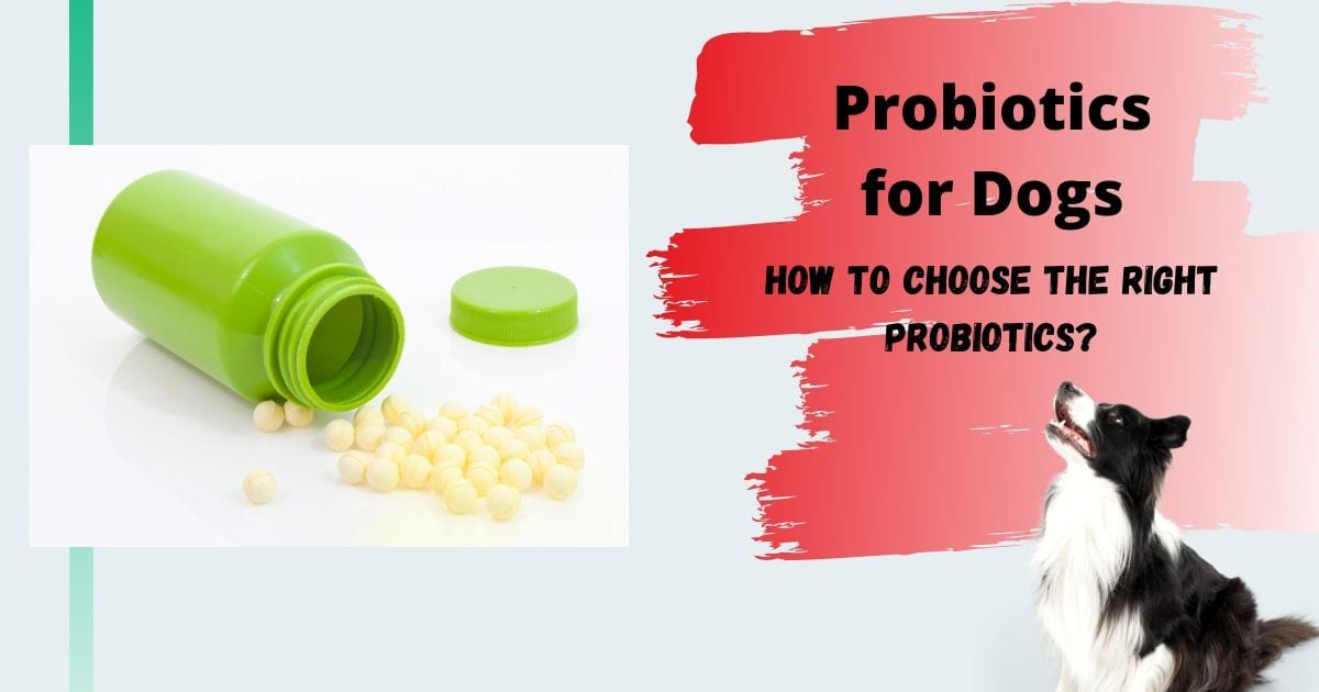 Probiotics for Dogs: How to Choose the Right Probiotics?