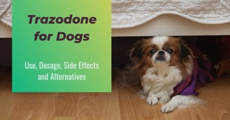 Trazodone for Dogs: Use, Dosage, Side Effects and Alternatives