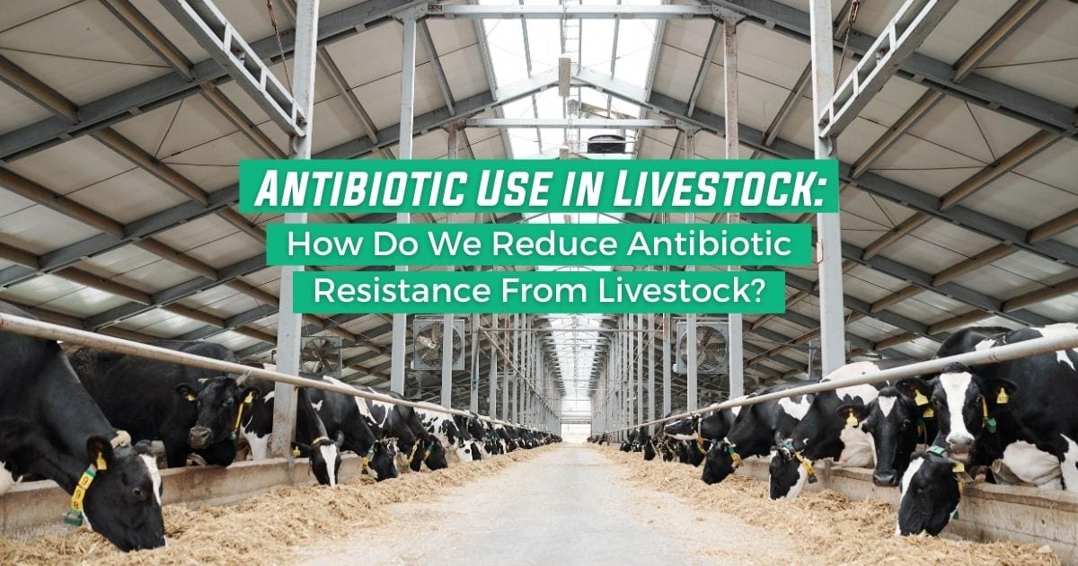 Antibiotic Use in Livestock: How Do We Reduce Antibiotic Resistance From Livestock?