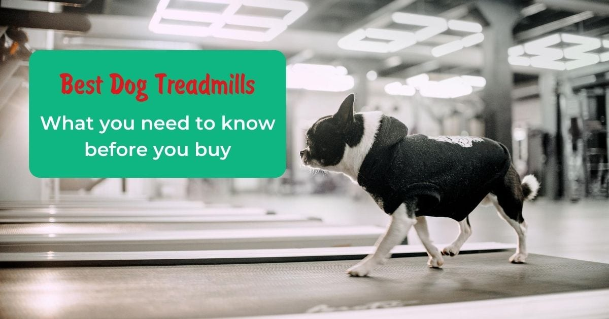 Best Dog Treadmills – What you need to know before you buy