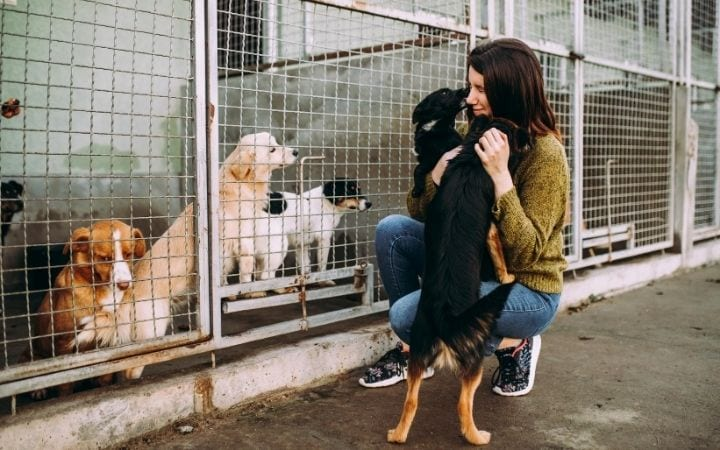 Dog shelter, What Can I Do If I Can't Afford a Vet? - I Love Veterinary
