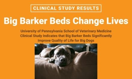 Advancements in canine arthritis: Decreased pain, improved mobility, and other key findings in UPenn's Clinical Trial of Big Barker Therapeutic Mattresses