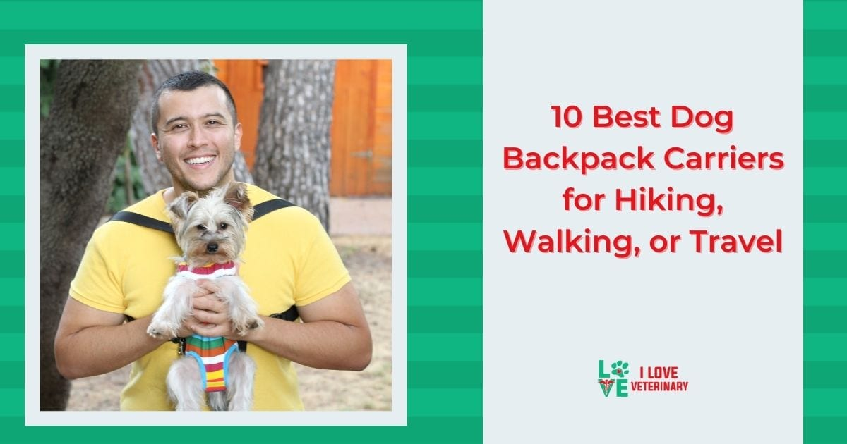 10 Best Dog Backpack Carriers for Hiking, Walking, or Travel