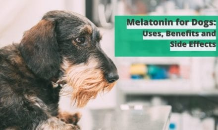 Melatonin for Dogs: Uses, Benefits and Side Effects