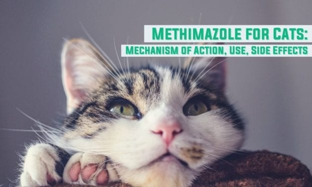 Methimazole for Cats: Mechanism of Action, Use, Side Effects