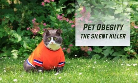 Pet Obesity – The Silent Killer
