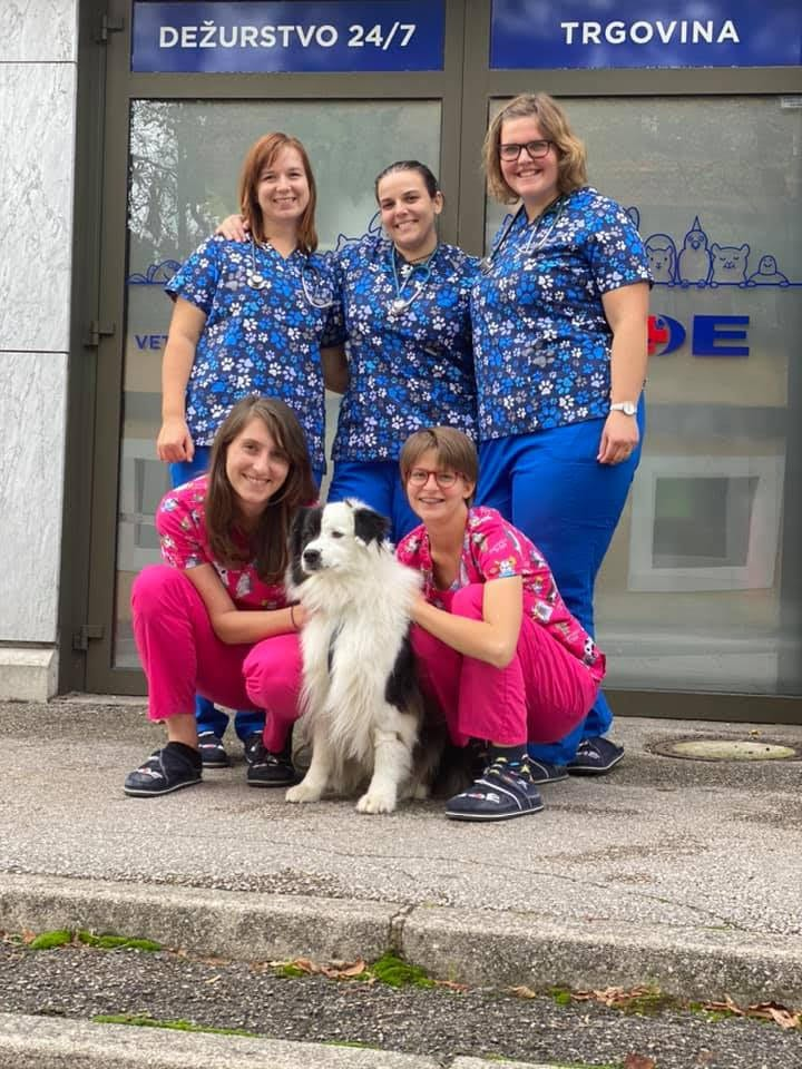 Vet Clinic of the Week: Veterina NOE - I Love Veterinary