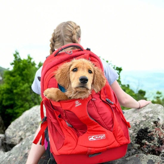 G-Train Dog Carrier Backpack review by I Love Veterinary