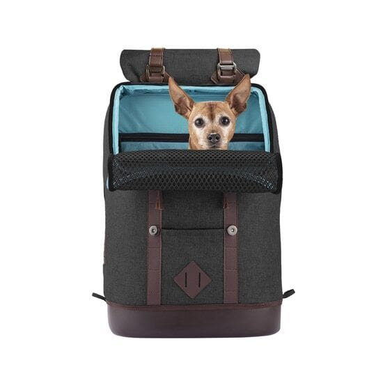 K9 Rucksack dog backpack review by I Love Veterinary