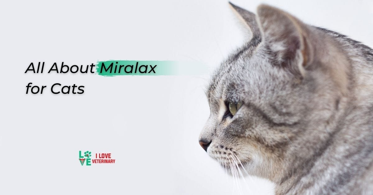 All About Miralax for Cats