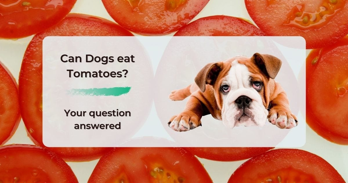 Can Dogs eat Tomatoes? Your question answered