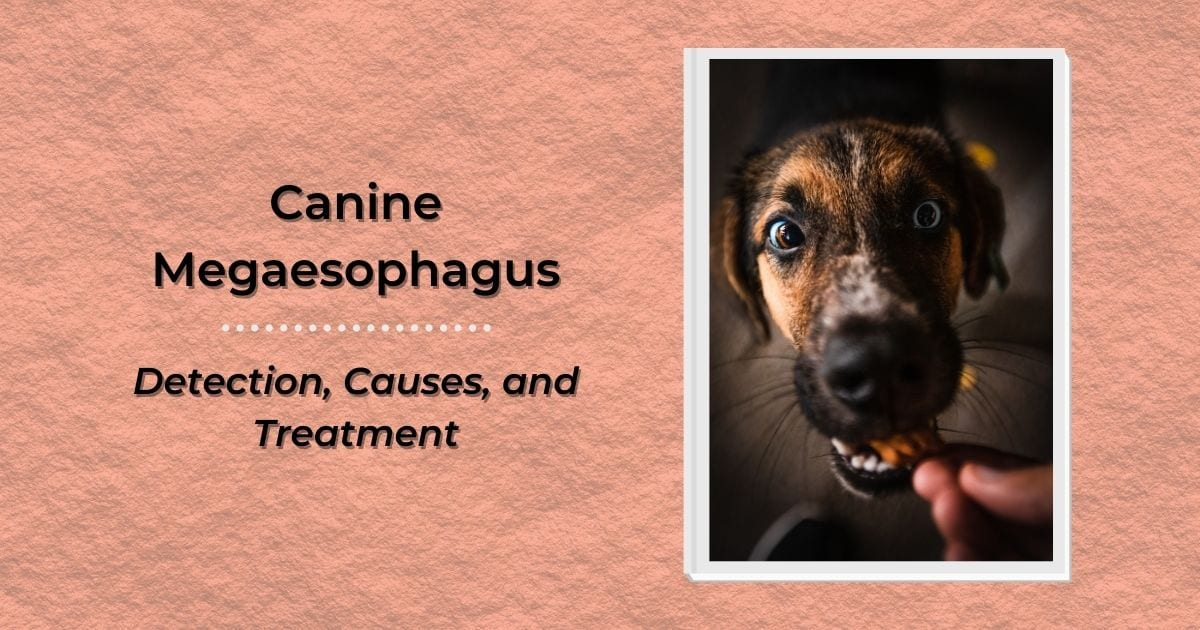 Canine Megaesophagus – Detection, Causes, and Treatment