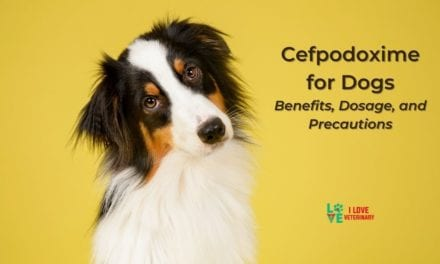 Cefpodoxime for Dogs – Benefits, Dosage, and Precautions