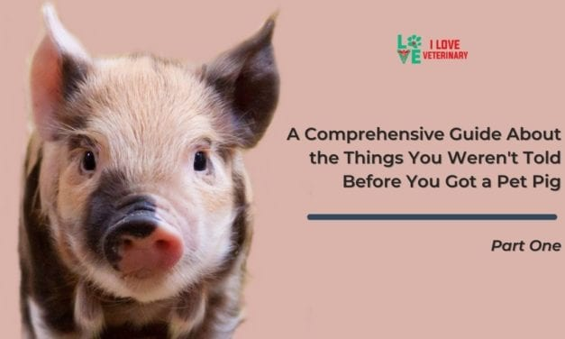 A Comprehensive Guide About the Things You Weren't Told Before You Got a Pet Pig – Part One