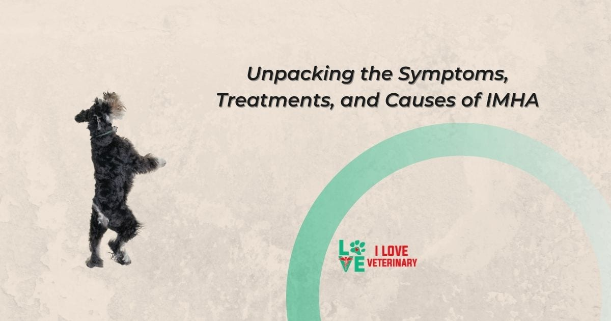 Unpacking the Symptoms, Treatments, and Causes of IMHA
