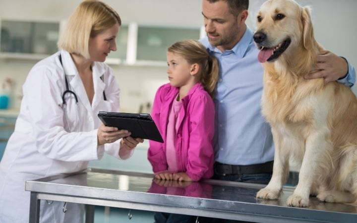 Vet with dog and owners, Unpacking the Symptoms, Treatments and Causes of IMHA - I Love Veterinary