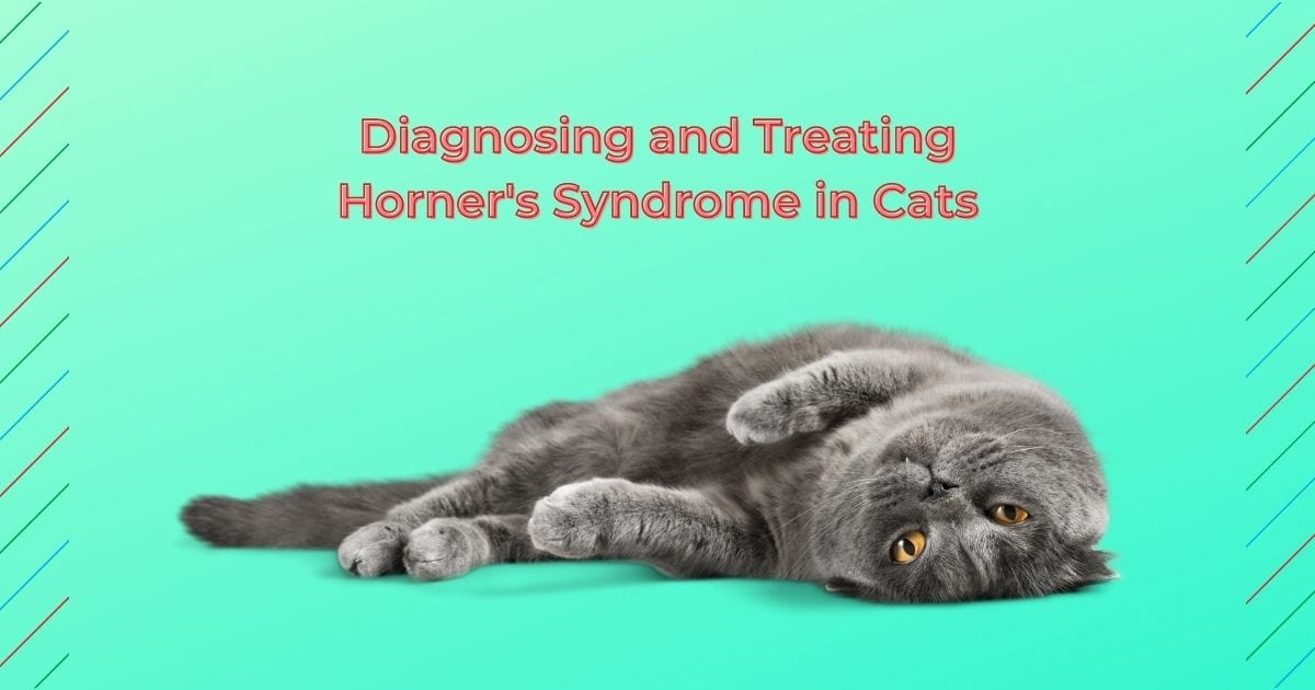 Diagnosing and Treating Horner's Syndrome in Cats